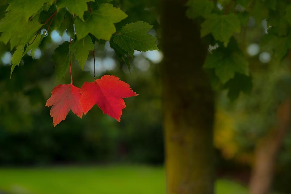 Hva vil høsten bringe?